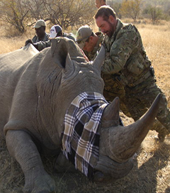 'Blunt and Fearless' Series on Rhino Killing by Natural History New Zealand