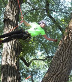 Kiwis top the International Tree Climbing Championship
