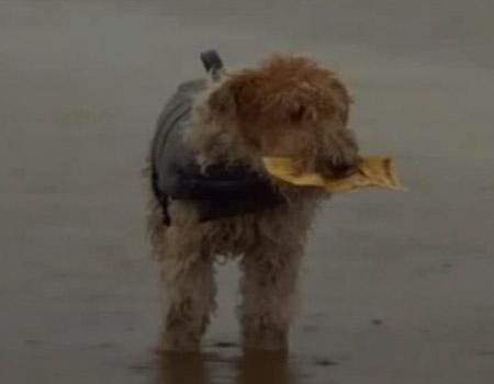 Winner of Best Ad Award 2011 – Lotto Dog