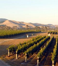 Wairarapa Pinot Noirs Outdoing the Best