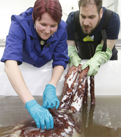 Rare Giant Squid a Spectacular Scientific Opportunity