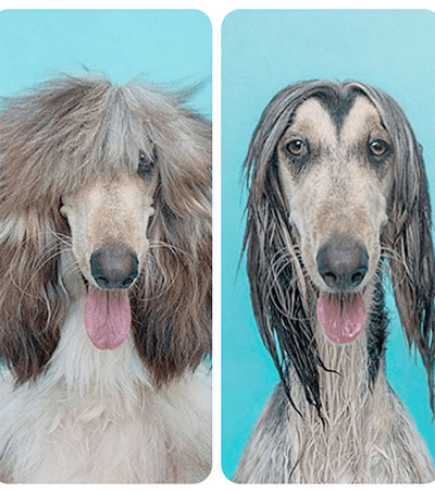 Wet Dogs Dry Dogs Captured by Serenah Hodson