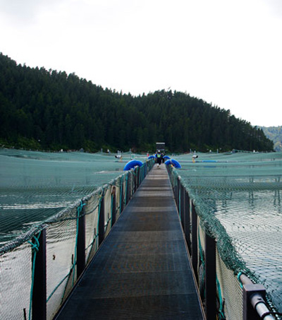 New Zealand Salmon Industry Leads the Way in Sustainability