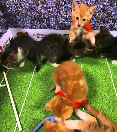 Kitten Rugby World Cup