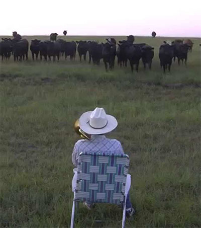 Farmer Plays Lorde's Royals till the Cows Come Home