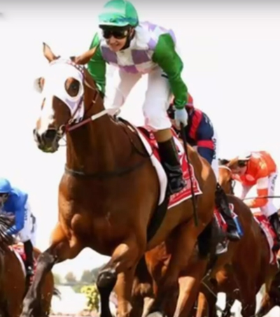 New Zealand Bred Horse Wins Melbourne Cup