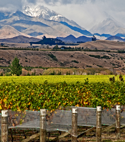 #199: Record New Zealand Wine Exports