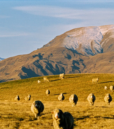 New Zealand Wins 'Top Country in the World' Award Voted by British Travellers