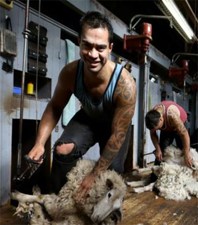 NZ Shearers Keeping Australian Wool Industry Afloat