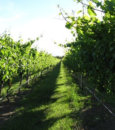 Why Martinborough, New Zealand, Should Be Your Next Wine Destination