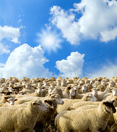 NZ and UK Talk Meat Deals Post-Brexit