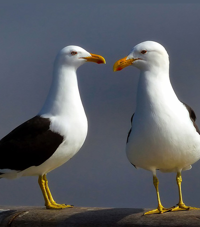 NZ Most Perilous Place for Seabirds