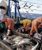 Saving Fish Stocks