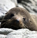 Safe Haven for Seals