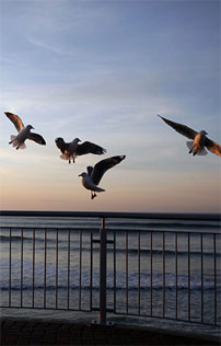 Gulls Lift Off Over St Clair