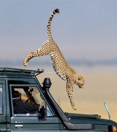 Safari Photographs to Be Exhibited in Pall Mall