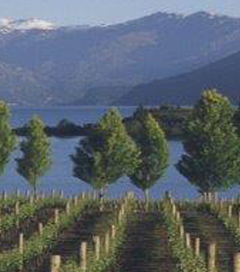 Sweet News for NZ Winemakers