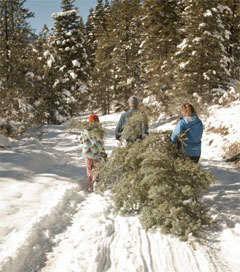 Tree Traditions for a New Mexico Christmas