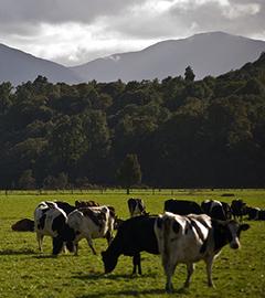 New Zealand Outpaces Crawling World Economy