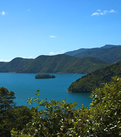 Triple Treat at Queen Charlotte Track
