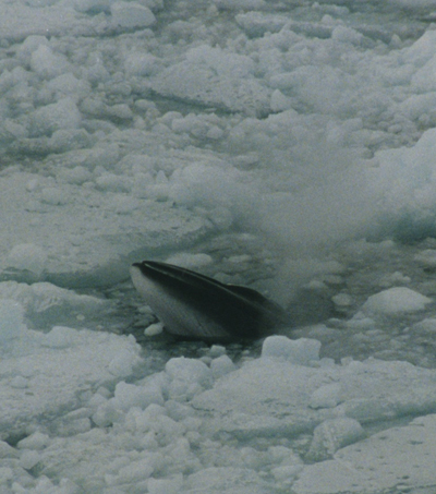New Zealand Voices Strong Protest over Japan's Antarctic Whaling