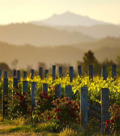 Best Italian Wines New Zealand Made