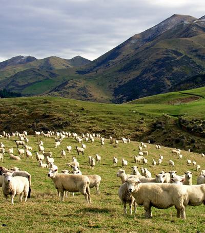 NZ Ranked Fourth in Global Prosperity Index