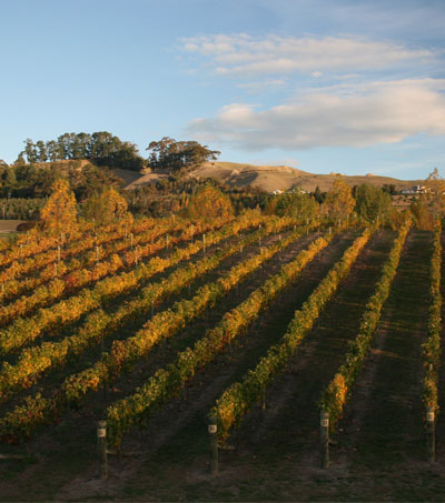 Wine and Fine Lodgings in Hawkes Bay