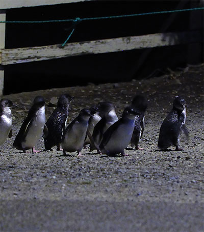 Oamaru's Underpass for March of the Penguins