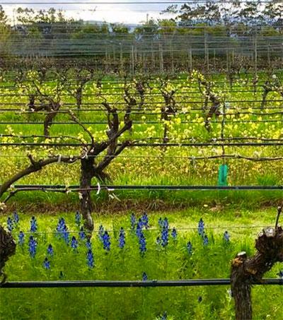 New Zealand Sauvignon Blanc Widens Its Scope