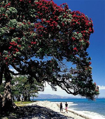 Coromandel NZ's Favourite Holiday Spot
