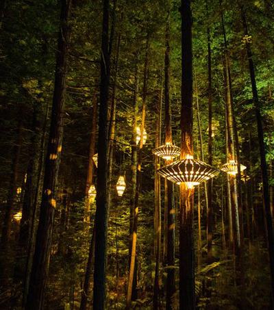 David Trubridge Design Create Redwoods Nightlights