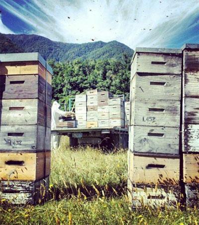NZ Devises Manuka Honey Test to Fight Fakes