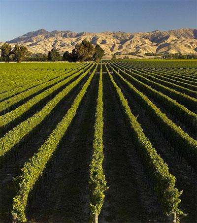 Americans Prefer Pricier NZ Wines to Australian