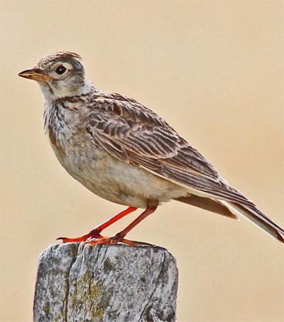We Need to Appreciate Undervalued Non-Native Birds
