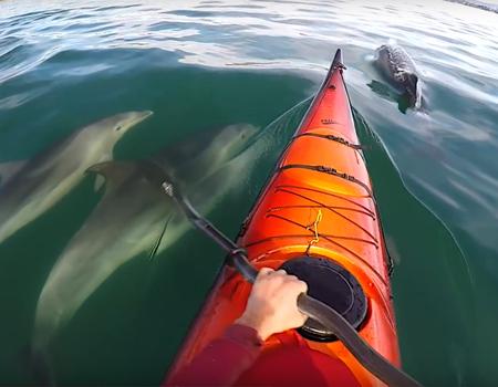 Bottlenose Dolphin Encounter