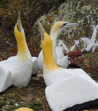 World's Loneliest Bird Nigel Dies on Mana Island