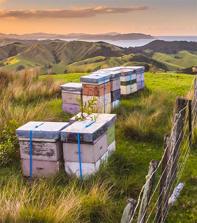 Keeping Manuka Honey Real