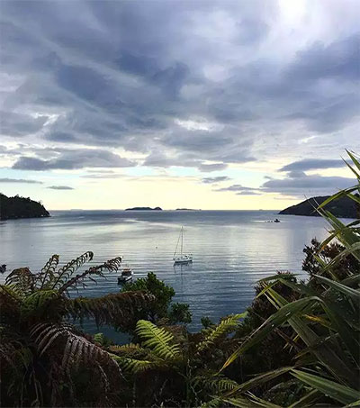 Stewart Island and the Elusive Kiwi